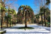 Пальмы вСочи снова накроет снег?