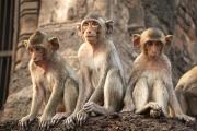 Больше половины приматов исчезнет с лица Земли