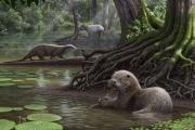 Палеонтологи нашли выдру размером с волка