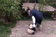 Панда, которая обожает обнимашки: видео