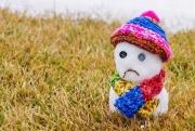 На юге Европейской России календарная весна начнется бурным потеплением