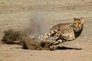 Почему самые большие животные не самые быстрые?