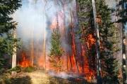 В ЯНАО из-за пожаров объявлен режим ЧС