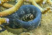 Морские змеи чернеют из-за грязи