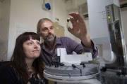 Океанские водоросли «усложнили» жизнь на Земле